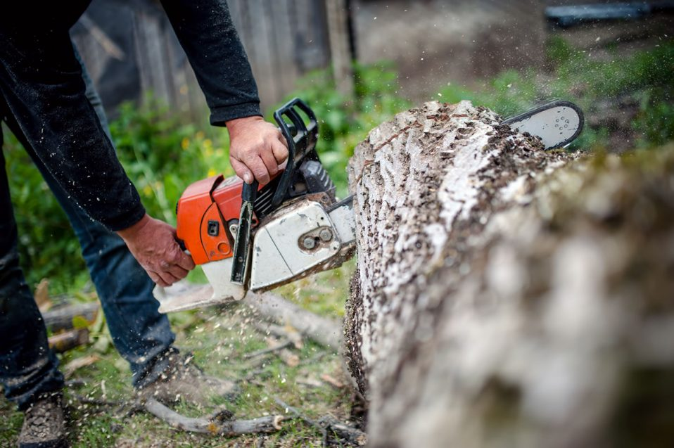 man with gasoline powered chainsaw cutting fire wood from trees in forest or garden