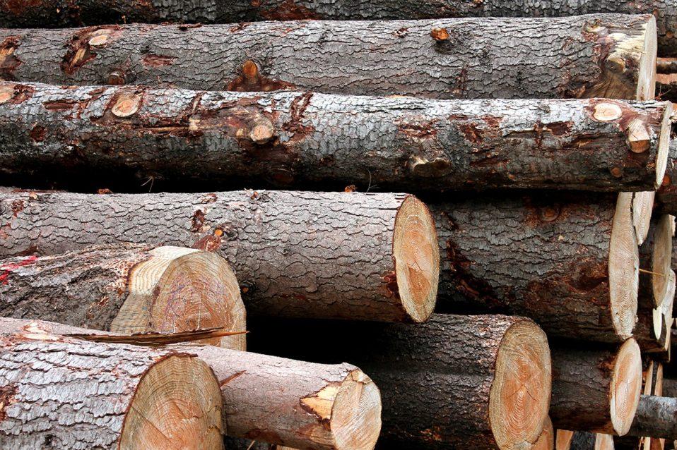 Tronc de bois, Cévennes