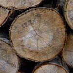 Seasoned Sugar Maple (Acer saccharum) Firewood